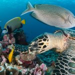 coral-reef-reef-fish-diving-zanzibar
